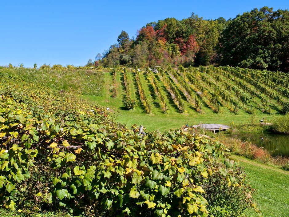 MountainRose Vineyards, Wise County, Virginia